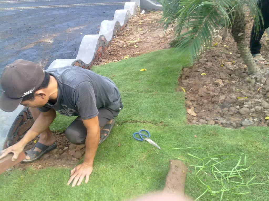 kỹ thuật chăm sóc cỏ sân golf