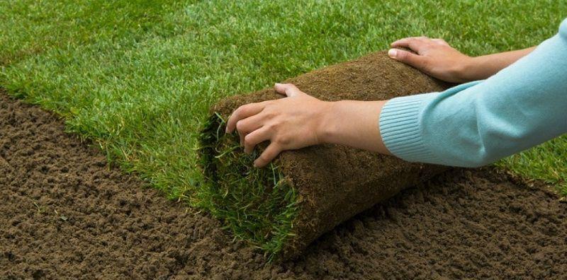 Trong kỹ thuật trồng cỏ sân golf, điều gì là quan trọng nhất?