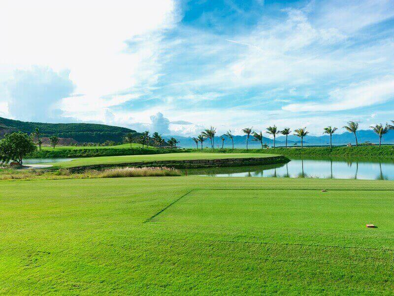 Sân golf Vinpearl Nha Trang được trồng bằng cỏ Seashore paspalum cao cấp